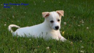 puppy Daisy